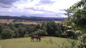 Pferd grast auf einer Wiese in der Eifel