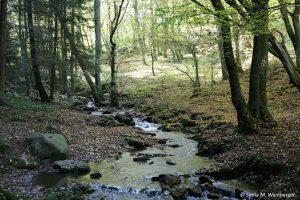 Bachlauf in den Wäldern der Eifel