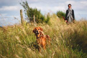 Urlaub mit Hund in der Eifel